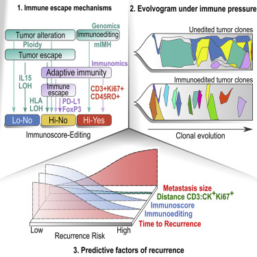 Evolution Of Metastases In Space And Time Under Immune Selection Sciencedirect