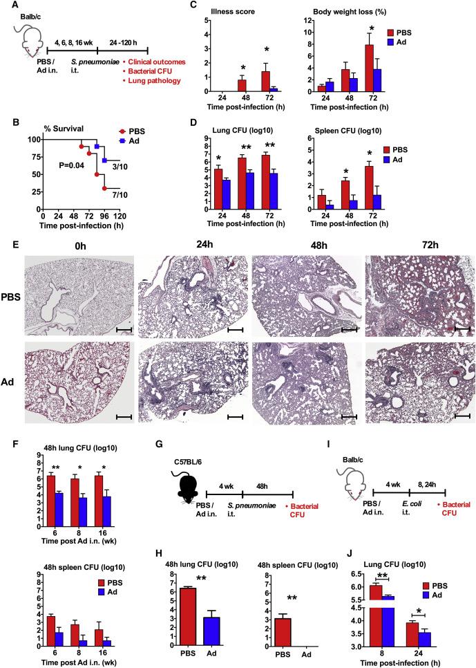 Induction of Autonomous Memory Alveolar Macrophages Requires