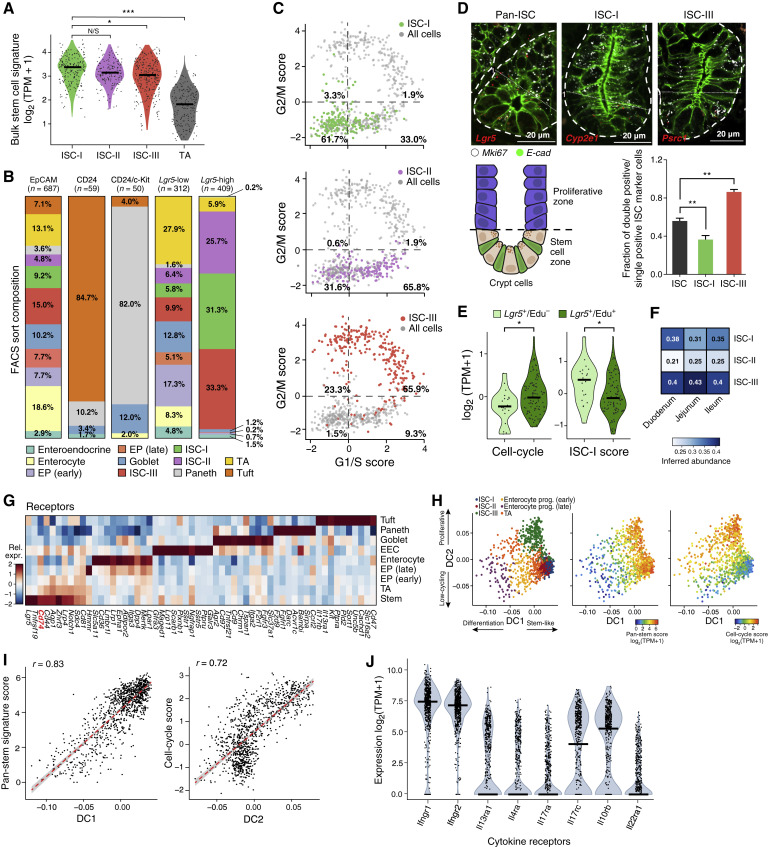 T Helper Cell Cytokines Modulate Intestinal Stem Cell Renewal and