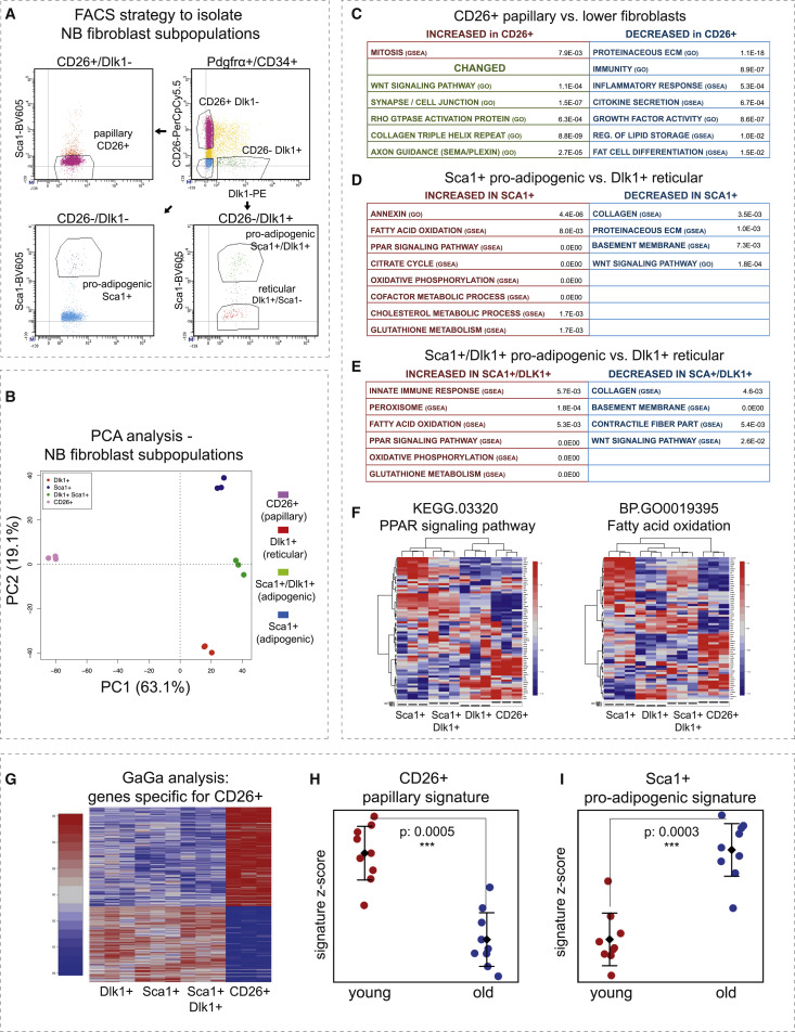 Identity Noise and Adipogenic Traits Characterize Dermal