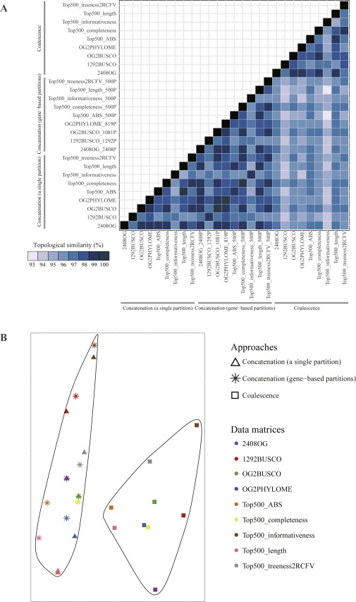 Tempo and Mode of Genome Evolution in the Budding Yeast