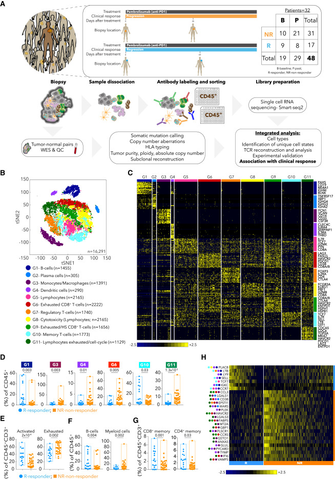 Defining T Cell States Associated with Response to
