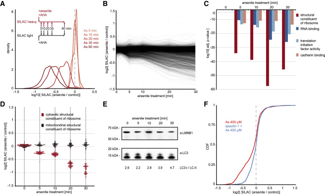 The Human RNA-Binding Proteome and Its Dynamics during