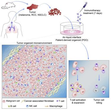 Organoid Modeling of the Tumor Immune Microenvironment