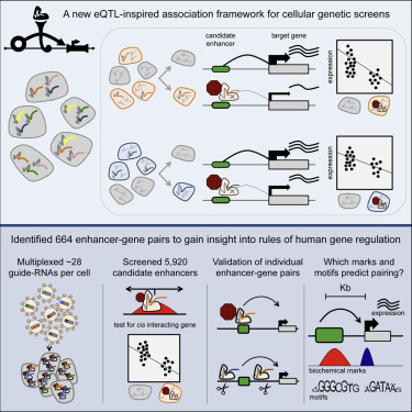 A Genome-wide Framework for Mapping Gene Regulation via ... on