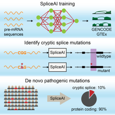Predicting Splicing from Primary Sequence with Deep Learning