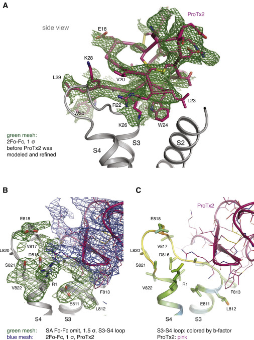 Structural Basis of Nav1 7 Inhibition by a Gating-Modifier Spider