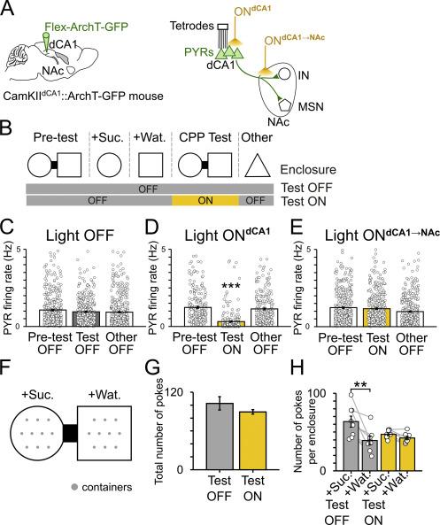 A Hippocampus-Accumbens Tripartite Neuronal Motif Guides