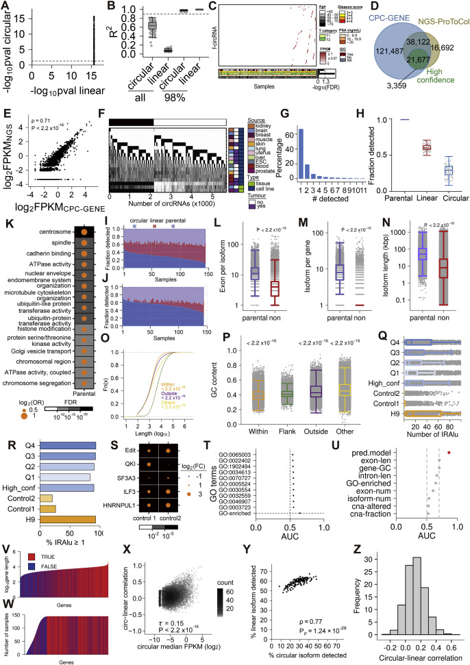 Widespread and Functional RNA Circularization in Localized Prostate