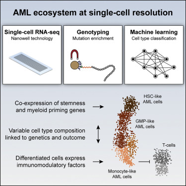 Single-Cell RNA-Seq Reveals AML Hierarchies Relevant to