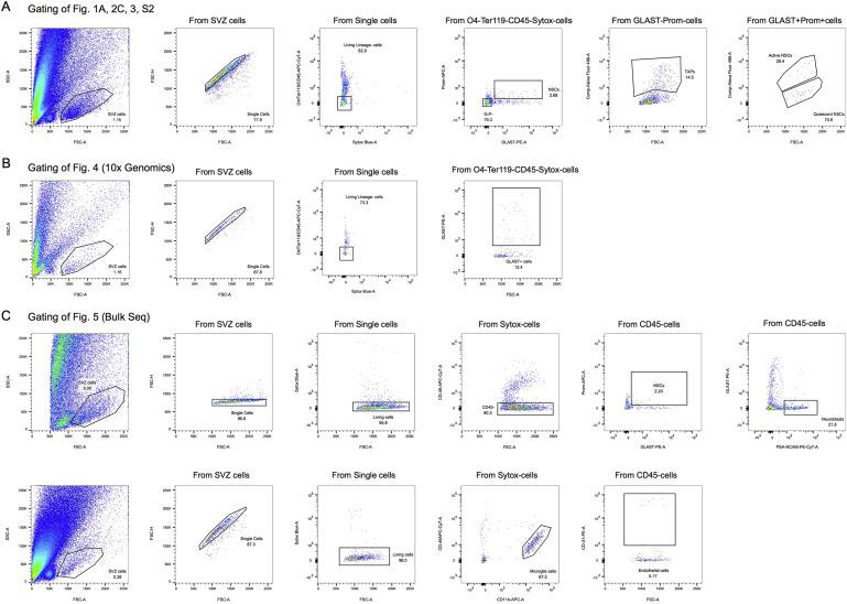 Quiescence Modulates Stem Cell Maintenance and Regenerative