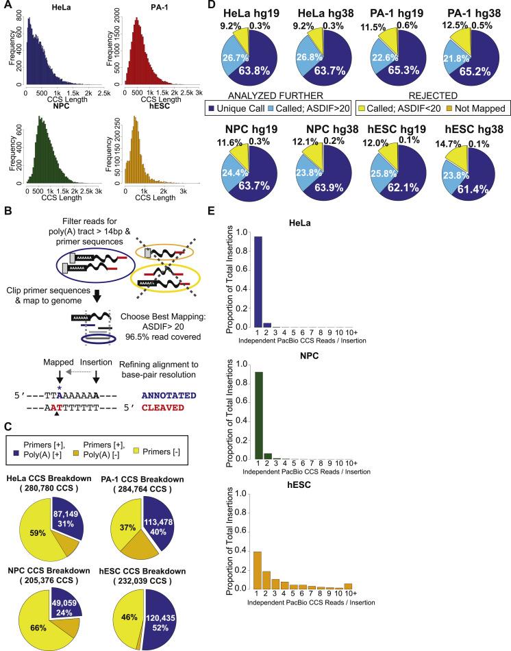 Genome-wide de novo L1 Retrotransposition Connects