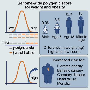 Polygenic Prediction Of Weight And Obesity Trajectories From Birth To Adulthood Sciencedirect
