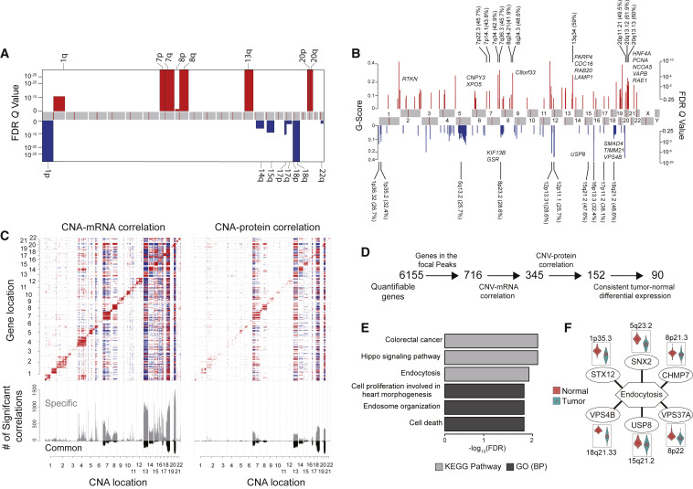 Proteogenomic Analysis Of Human Colon Cancer Reveals New Therapeutic Opportunities Sciencedirect