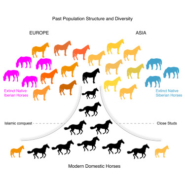 Tracking Five Millennia of Horse Management with Extensive