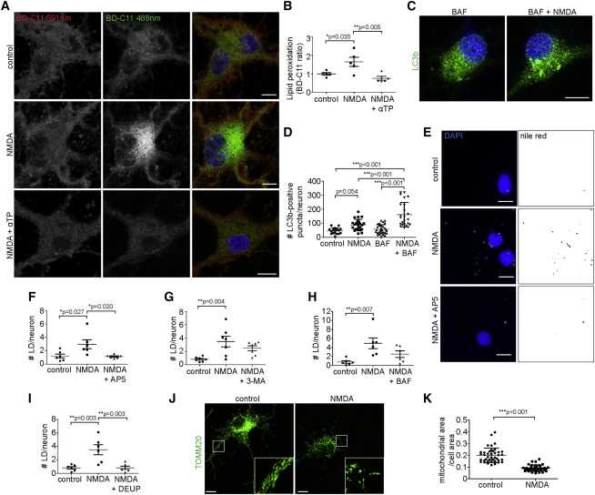 Neuron-Astrocyte Metabolic Coupling Protects against Activity