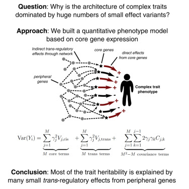 Trans Effects on Gene Expression Can Drive Omnigenic Inheritance