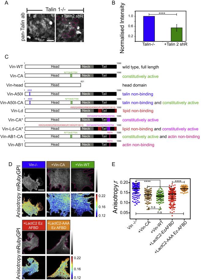 Integrin Mechano-chemical Signaling Generates Plasma Membrane