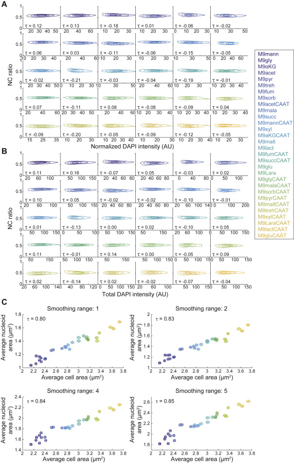 Nucleoid Size Scaling and Intracellular Organization of ...