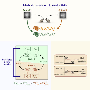 Correlated Neural Activity and Encoding of Behavior across