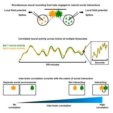 Correlated Neural Activity across the Brains of Socially
