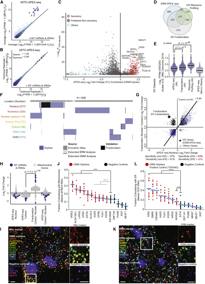 Atlas of Subcellular RNA Localization Revealed by APEX-Seq