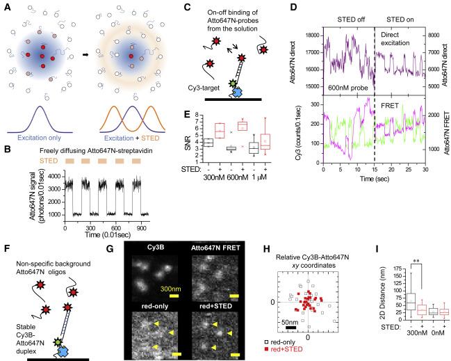 Single-Molecule Nanoscopy Elucidates RNA Polymerase II Transcription