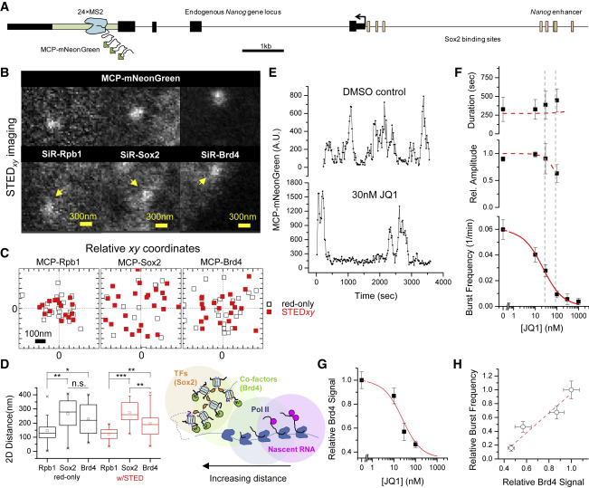 Single-Molecule Nanoscopy Elucidates RNA Polymerase II Transcription