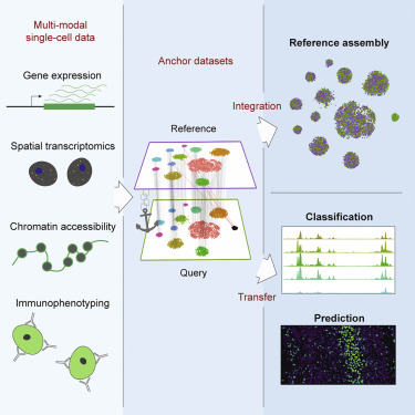 Comprehensive Integration of Single-Cell Data - ScienceDirect