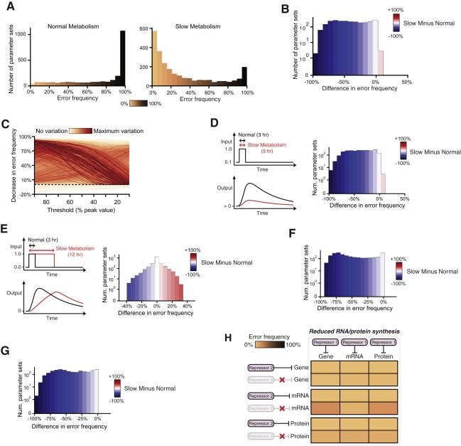 Repressive Gene Regulation Synchronizes Development with