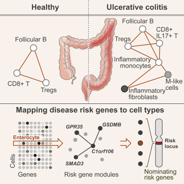 Intra- and Inter-cellular Rewiring of the Human Colon during ...