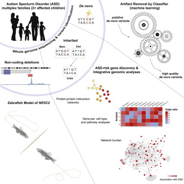 Inherited and De Novo Genetic Risk for Autism Impacts Shared