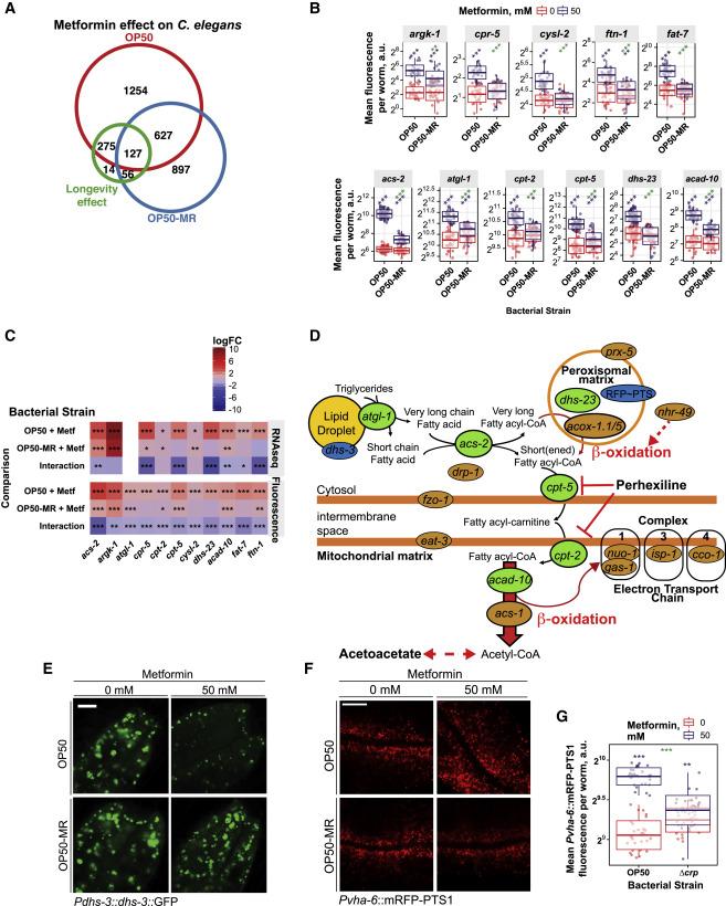 Host-Microbe-Drug-Nutrient Screen Identifies Bacterial