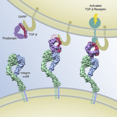Molecular characterization of a first endo-acting β-1,4-xylanase.