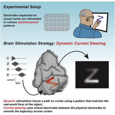 Dynamic Stimulation Of Visual Cortex Produces Form Vision In Sighted And Blind Humans Sciencedirect