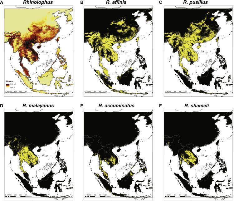 Identification of novel bat coronaviruses sheds light on the ...