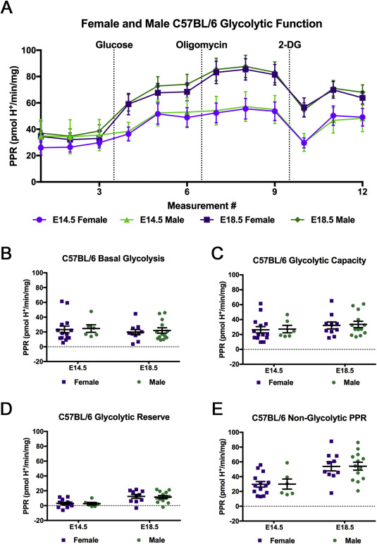 Gestational differences in murine placenta: Glycolytic metabolism