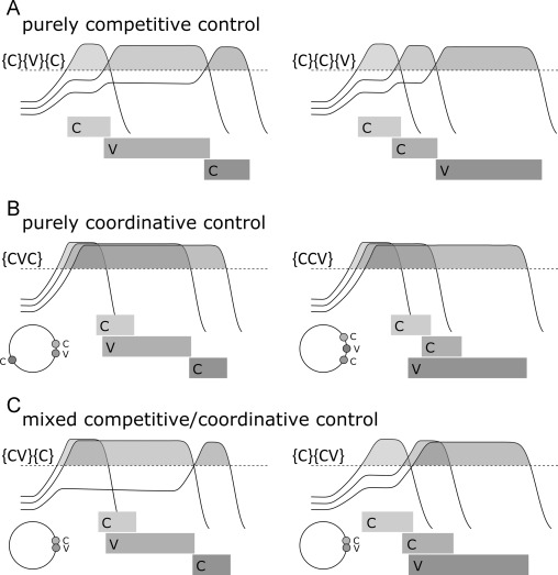 Selection and coordination: The articulatory basis for the