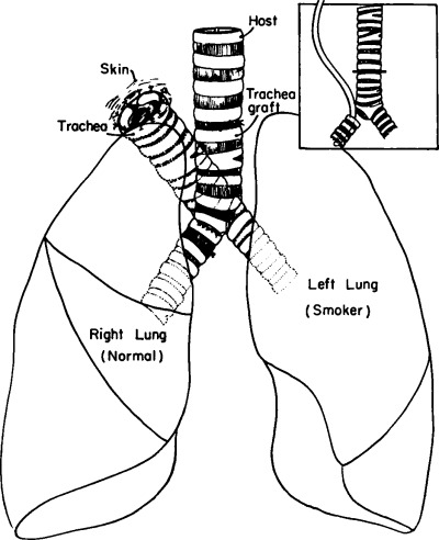 An Attempt To Produce A Unilateral Smoking Dog Using The