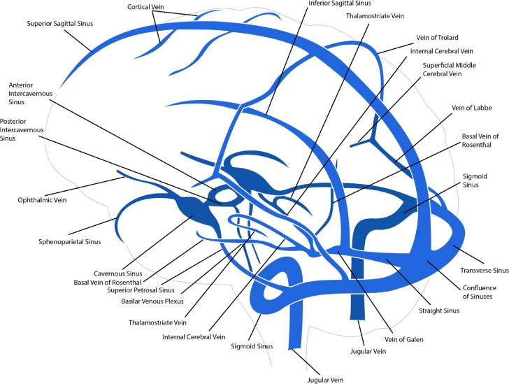 Brain Venous Haemodynamics Neurological Diseases And Mathematical
