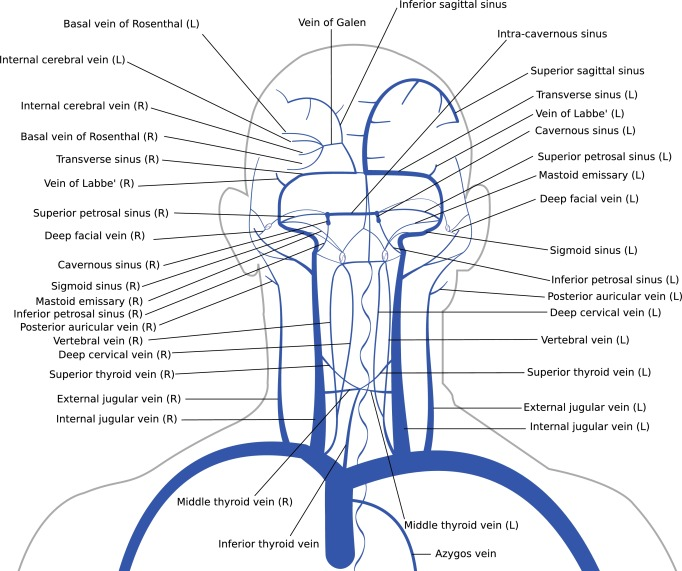 Brain Venous Haemodynamics Neurological Diseases And Mathematical