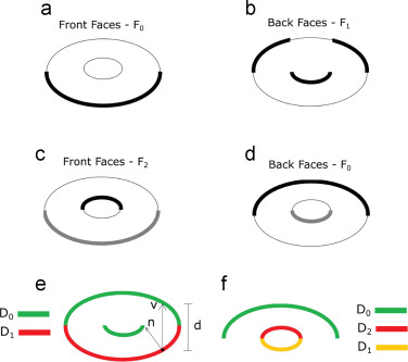 GPU-based approaches for shape diameter function computation