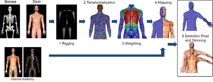 Anatomy Poses Generator