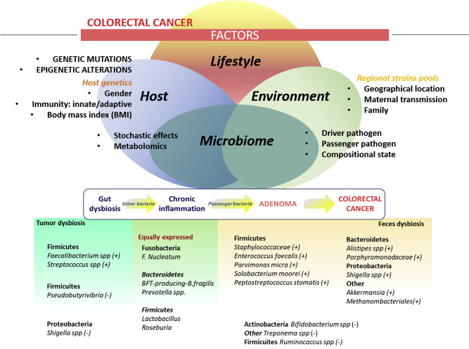 Microbiome And Colorectal Cancer Roles In Carcinogenesis And Clinical Potential Sciencedirect