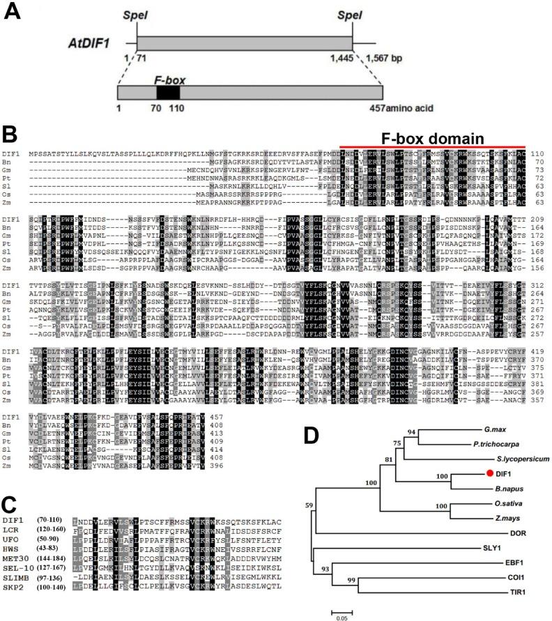 An F-box E3 ubiquitin ligase-coding gene AtDIF1 is involved