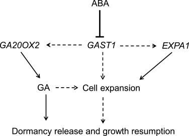 Aba Releases Findings And >> Ppygast1 Is Potentially Involved In Bud Dormancy Release By