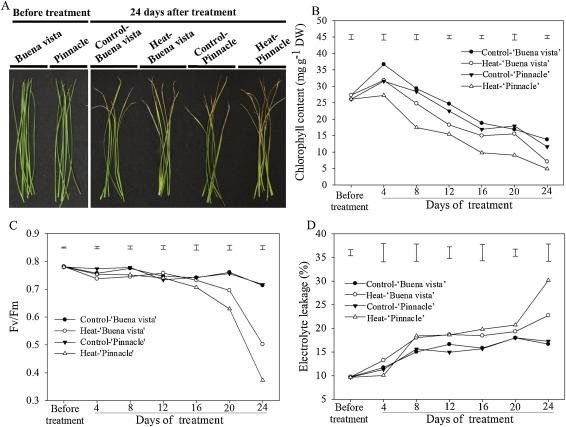 Transcriptional Regulation Of Chlorophyll Catabolic Genes