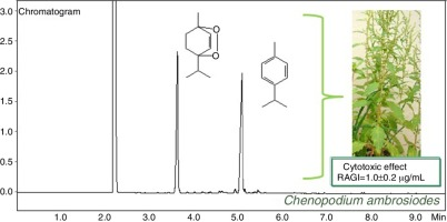 Characterization and evaluation of the cytotoxic potential