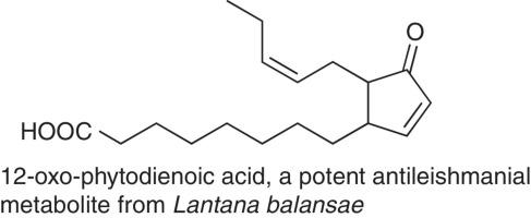 Antileishmanial metabolites from lantana balansae sciencedirect download full size image ccuart Images