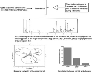 Chemical composition and seasonal variability of the